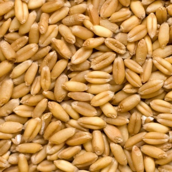 Пшеница цельная, 30 кг
